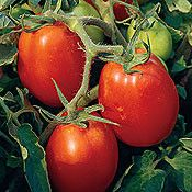 Companion Planting Tomato 'Roma' - 1 Plant - A smaller paste tomato that has meaty red interiors for superior sauces. Top quality tomato plants delivered to your doorstep. Backyard Vegetable Gardens, Tomato Garden, Garden Soil, Container Vegetables, Planting Vegetables, Growing Vegetables, Growing Tomato Plants, Growing Tomatoes In Containers, Companion Gardening
