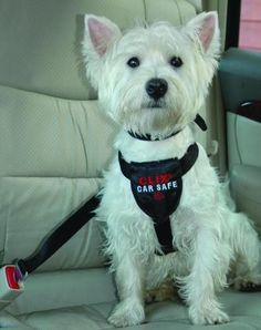 "Description - Keeps your dog safe in the car by easily clicking into seat-belt or looping seat-belt through - Doubles as a walking harness - Soft neoprene padding and ""X-Cross"" design for comfort and"