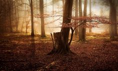 Woods Mystery Photography - Lee Acaster