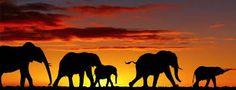 Pourquoi le braconnage nuit aux safaris by Hôtel*** RESTAURANT gourmand COCO LODGE MAJUNGA