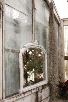Shelldance Orchid Gardens mirror in glasshouse