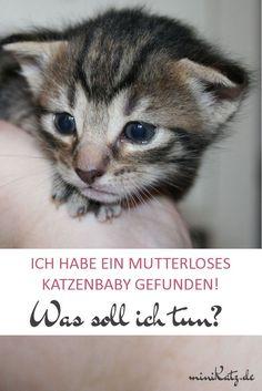 Erste Hilfe bei Fundkätzchen - Wenn man ein Katzenbaby ohne Mutter gefunden hat, ist es wichtig, schnellstmöglich die richtigen Maßnahmen zu ergreifen. Hier ist eine Anleitung, was du tun kannst, um der Babykatze zu helfen. Noch ganz kleine Kitten sind sehr empfindlich und können ohne intensive Pflege nicht überleben. Wir helfen dir dabei, diese Herausforderung zu meistern! Du erfährst, wie du das Alter des Katzenbabys bestimmen kannst und was du für die Versorgung der Babykatze brauchst.