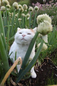 ネギ坊主 - かご猫 Blog
