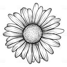 Image Result For Gerber Daisy Drawing Daisy Drawing Daisy Tattoo Daisy Flower Tattoos