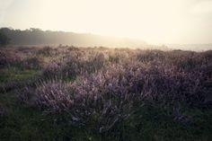 magic-spelldust:  Golden Mornings (by Morphicx)