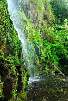 Erskine Falls, Victoria, Australia.