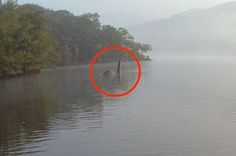 Even if you don't believe in paranormal phenomena like ghosts or Bigfoot, these photos will make you think twice. Catch a glimpse of some spooky pictures. Real Ghost Photos, Spooky Pictures, Cool Pictures, Ghost Pictures, Funny Pictures, Paranormal Stories, Paranormal Photos, Weird Creatures, Mythical Creatures