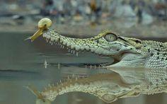 snail on croc