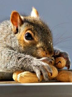 Ahhh, all for me...(**Feelin' Squirrely** group board)