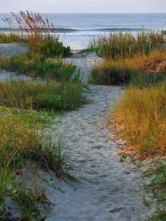 Lets meander to the Beach! This is so like Cape Cod.but I would take ANY beach.and an ocean beside it. I Love The Beach, Am Meer, Beach Scenes, Ocean Beach, Beautiful Beaches, Seaside, Paths, Coastal, Surfing