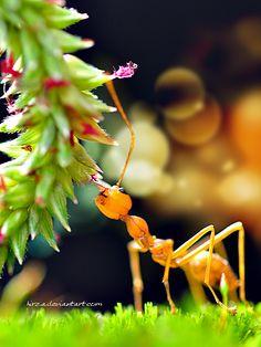 Meriahnya Semut ini by ~hirza on deviantART