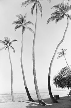 Photograph by Henry Wessel