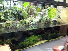 HUGE !!! Green Chapter - Stunning Aquarium Simply For You