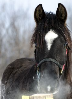 Horse, Cheval Photos, Horses, Animals, Horse, Animales, Pictures, Animaux, Words, Animal