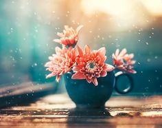 Chanting melodies by Ashraful Arefin - Photo 182594227 / 500px