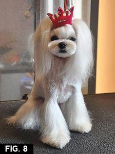 Resultado de imagen de asian style fusion dogs