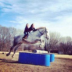 Wow! Percheron jumping!