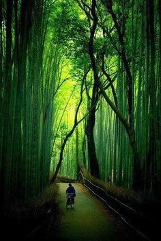 The Bamboo Forest in Arashiyama, Kyoto. Japan | Most Beautiful Pages