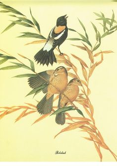 Vintage Book Print of Bobolinks by Menaboni 1895 by ranicaprints