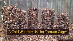 With winter rolling around the corner and the cold sweeping the nation, it's a better time than ever to protect your fruits and vegetables in your garden, but what if you wanted to protect your tomatoes? Here you will find a few great uses for cold weather use for tomatoe cages that will keep you …