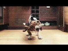"""""""Der Bona Spray-Mop ist mein Freund geworden!"""" (reinhard.weix) #Bona #Haushalt Youtube, Animals, Boyfriend, Household, Animales, Animaux, Animal, Youtube Movies, Animais"""