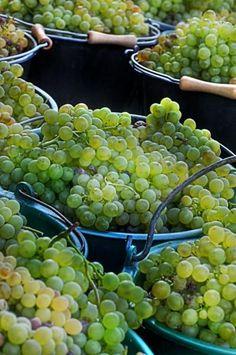 Lifestyle & Wine | Saint-Paul de Vence
