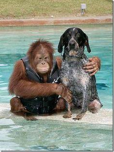 dog , monkey , friendship