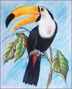 Art Drawings For Kids, Bird Drawings, Colorful Drawings, Easy Drawings, Animal Drawings, Drawing Sketches, Colour Pencil Shading, Color Pencil Art, Watercolor Paintings For Beginners