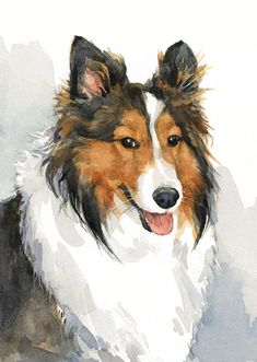 5x7 commissioned watercolor Sheltie
