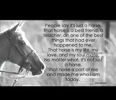 Horses reflect what we may not know about ourselves and teach us to be more accepting and true to who we really want to be. They we show you who you are being and who your YOU really is - you just have to listen! #HorsesHealHearts