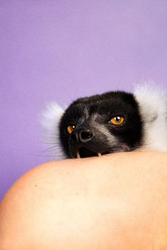 Lemur (Lilac) - Ryan McGinley TAKE A BITE OUT OF CRIME . LOL