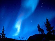 --волки стихи 2   Записи в рубрике --волки стихи 2   ДневникЛИОЛА-52 : LiveInternet - Российский Сервис Онлайн-Дневников