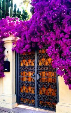 Beautiful Bougainvillea, Marbella, Málaga, Spain
