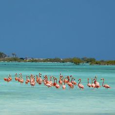 """Happy Easter!  What did the easter bunny bring you?  We don't have an easter bunny but we do have an easter flamingo!  He's giving one lucky winner a 7 night caribbean summer vacation!   Enter here: https://ift.tt/2kXHYT4 or visit www.DiviResorts.com and click the pink """"Enter to Win a 7-Night Stay"""" button on the bottom right-hand corner of the page. Contest ends April 11th at 4 p.m. EST.  #diviresorts #discoverdivi #aruba #barbados #bonaire #stmaarten #relax #vacation #travel #travelgram…"""