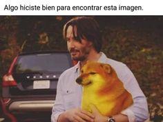 Cute Memes, Stupid Funny Memes, Haha Funny, Funny Dogs, Dankest Memes, Memes Lindos, Doge Meme, Current Mood Meme, Meme Faces