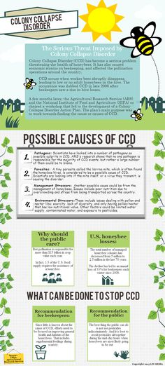 Infographic: Colony Collapse Disorder | WWLP.com