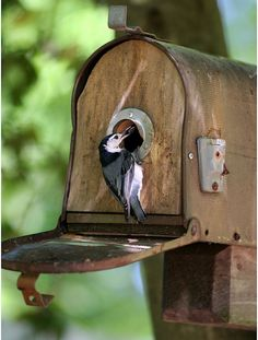 Mailbox used as bird house Attract new neighbors by nailing an old mailbox to a branch and watch house finches and wrens flock to feather their nests. Description from pinterest.com. I searched for this on bing.com/images