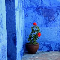 The BLUE wall and red geranium