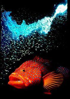 Maldive Crociere sub