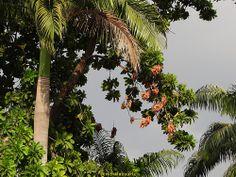 Los fantasticos contrastes de la naturaleza. Ni siquiera estando secan dejan de adornar. Este conjunto no seria lo mismo sin ellas!!!!!!!!!!