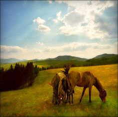 Time to go home-summer landscape by Katarina 2353, via Flickr