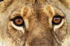 Beast: eye setting