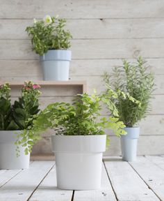SLIM FLOWER POT  Small plants in tight spaces. A perfect solution for small plants in tight spaces.  No need for under-plate and no annoying puddles after you water.