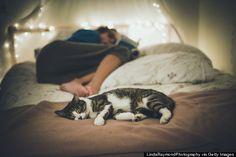 mascotas cama del sueño