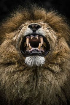 The lion's power lies in our fear of him. Nigerian Proverbs