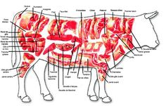 Where different cuts of beef come from on the cow Beef Cuts Chart, Boeuf Angus, Different Cuts Of Beef, Cooking Tips, Cooking Recipes, Brick Bbq, Meat Packing, Food Science, Home Food