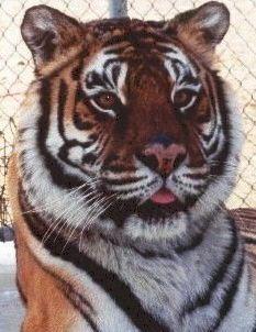 East Coast Exotic Animal Rescue, Fairfield, PA
