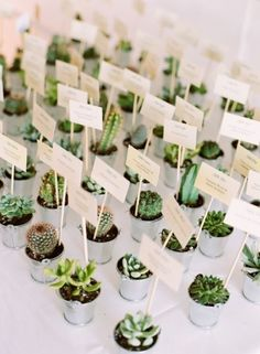 Mini Cactus Wedding Favors: Let the guests bring some of the party home with them by sending them on their way with a cute little cactus!