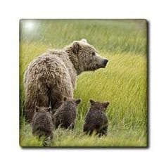 """Alaska, Lake Clark NP, grizzly bear - US02 BJA0125 - Jaynes Gallery - 12 Inch Ceramic Tile by 3dRose. $22.99. Dimensions: 12"""" H x 12"""" W x 1/4"""" D. High gloss finish. Image applied to the top surface. Clean with mild detergent. Construction grade. Floor installation not recommended.. Alaska, Lake Clark NP, grizzly bear - US02 BJA0125 - Jaynes Gallery Tile is great for a backsplash, countertop or as an accent. This commercial quality construction grade tile has a high gloss ..."""