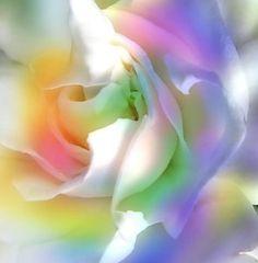 Pastel Color rainbow | Rainbow Gardenia: A gardenia edited with pastel rainbow colours.